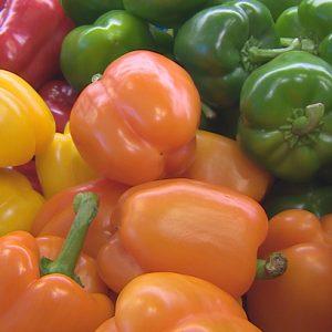 Bio Gemüsekiste für Zuhause