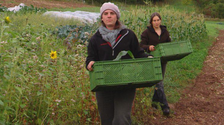 Kisten im eigenen Garten - Urban Gardening