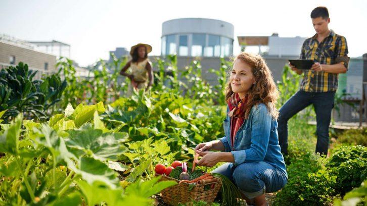 Selber Gemüse anbauen ist die Zukunft