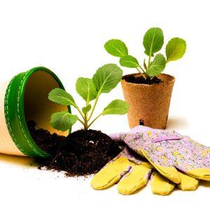 Gartenarbeit Zuhause