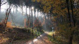 Naturschutzgebiet Bergisch Gladbach
