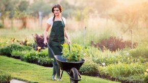 Gartenarbeit verbraucht viele Kalorien