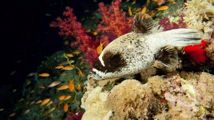 Nachts eröffnet sich unter Wasser eine neue Welt