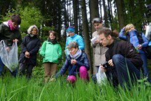 Wildkräuter Führung mit Andrea Nossem