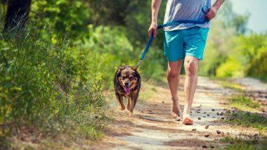 Im Alltag barfuß unterwegs sein - auch beim Spaziergang mit dem Hund