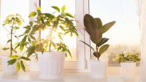 Zimmerpflanzen sind gesund
