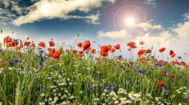 Allergieauslöser Übersicht
