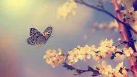 Pollenflug im Mai
