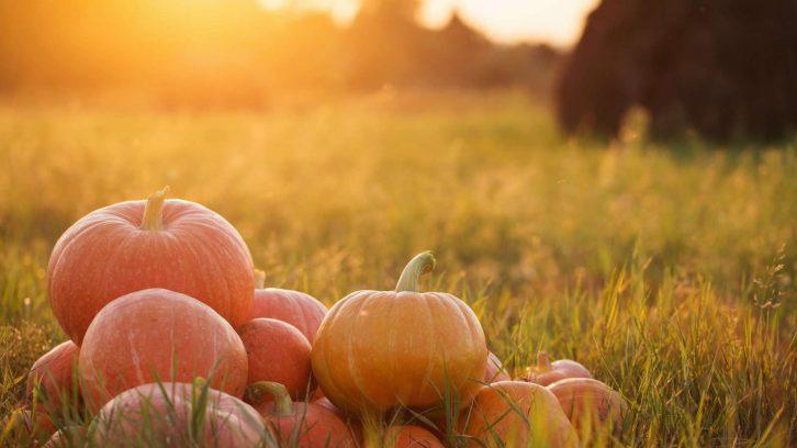 Herbst Ernährung TCM