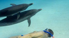 Mit Delphinen schwimmen