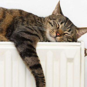 Gelassene Katze liegt auf Heizung