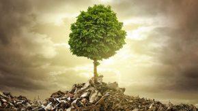 Ein Baum wächst auf einem Müllberg - Wir sollten nachhaltiger leben