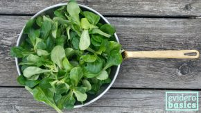 Gesunder Feldsalat