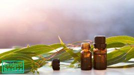 Eukalyptus hilft bei Allergien