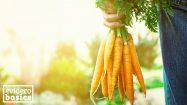 Möhren und Karotten - Gesundes Gemüse