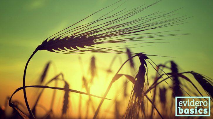 Gerste als Getreide oder Gerstengrassaft