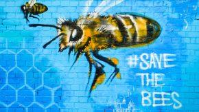 Gefahr für Bienen: Chemikalien