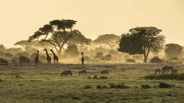Reisebericht Kenia