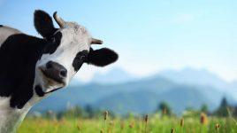 Schädliche Milch: So wirkt Milch auf die Gesundheit