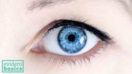 Vitamin A ist gut für die Augen