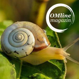 OMlinemagazin - Achtsamkeits Blog