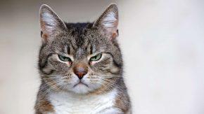 Wütende Katze? So kann man Wut rauslassen
