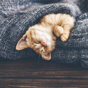 Kätzchen ist glücklich in einer Decke im Winter