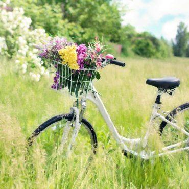 Fahrrad in der Natur: Green living