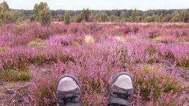 Reisetipps für den Herbst: Lüneburger Heide