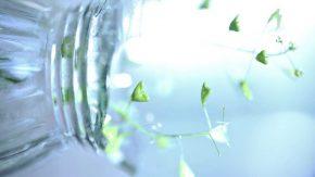 Grüne Smoothies Woche