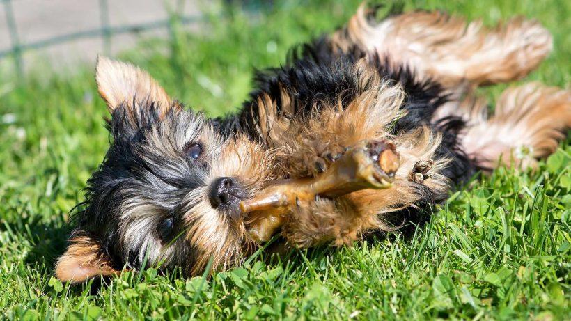 Hunde Ernährungs-Beratung kostenlos