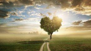 Naturverbundenheit und Umweltschutz