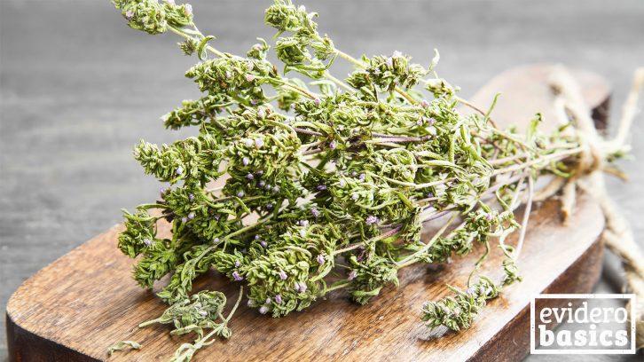 Thymian als Heilpflanze