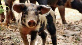 Wir brauchen eine neue Tier Ethik