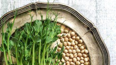 Bioverfügbarkeit von Lebensmitteln