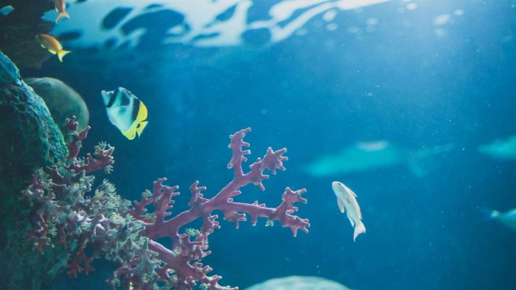 Mikroplastik belastet die Ozeane