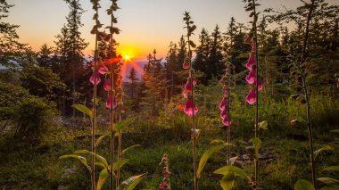 Innere Ruhe durch die Verbundenheit mit der Natur