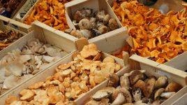 Pilze sind unheimlich, aber lecker
